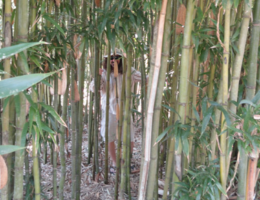 coastal botanical gardens bamboo forest picture