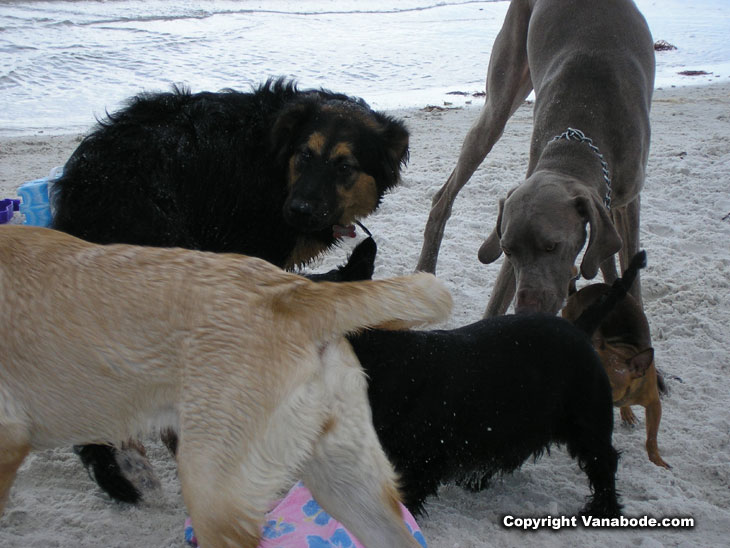 dog beach is friendly to all breeds and sizes picture