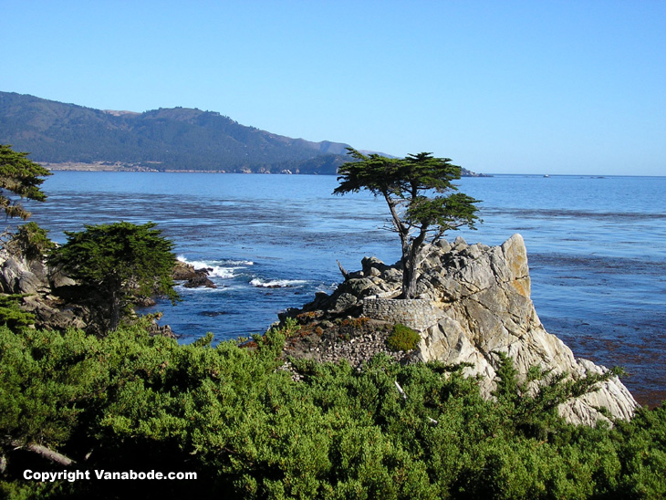 tree growing on the shoreline in California
