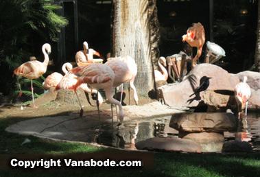 Flamingo casino wildlife habitat