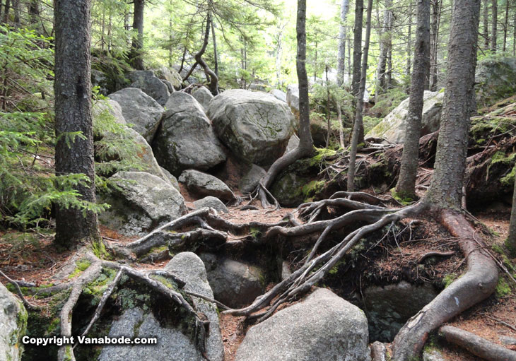 grafton notch tree lined uphill trails