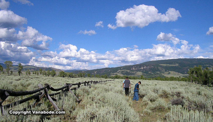 picture of sage covered field in grand tetons wyoming
