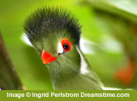 green bird image