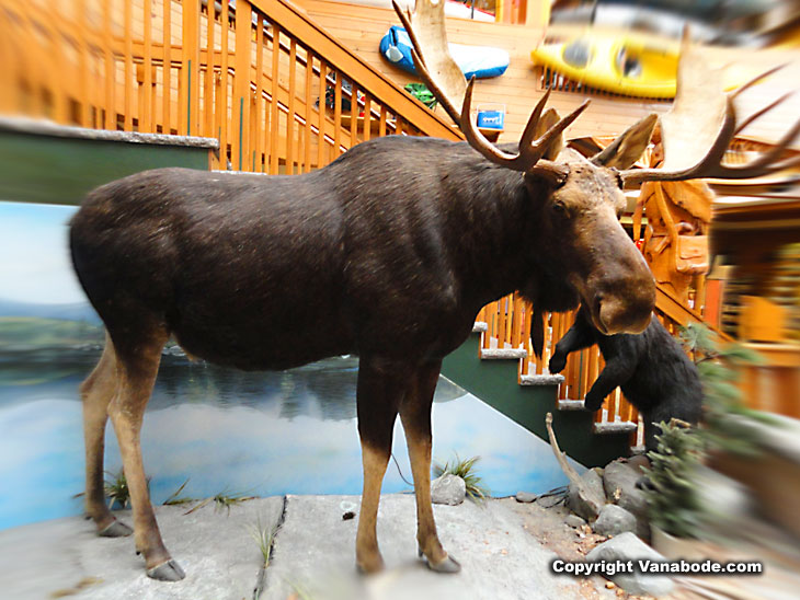 kittery trading post in maine of moose