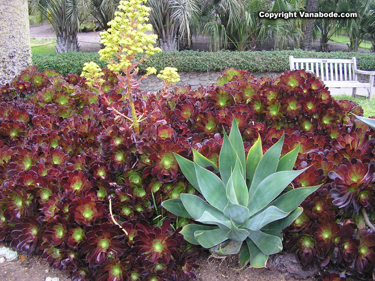 Huntington Library California Pictures