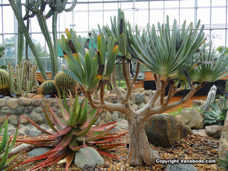 Native Orchids Forty Foot Tall Agave Flower Stalks Year Old Bonsai Trees Acres Of Real Vegetable Producing Gardens A Kid S World And Rock