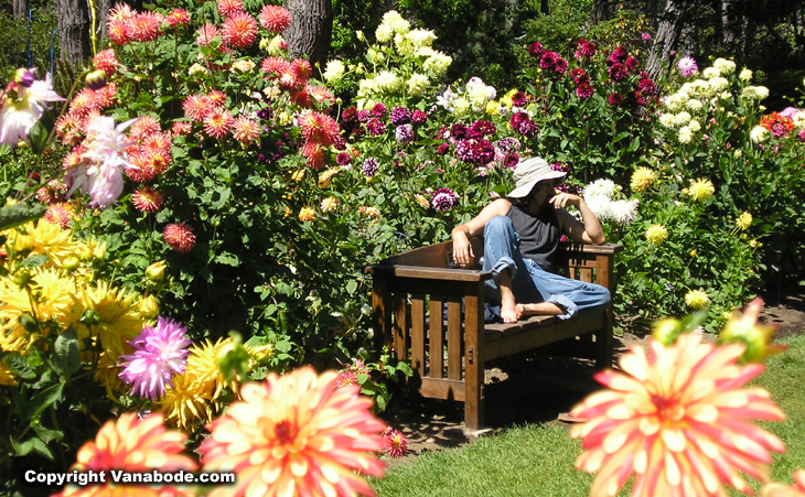 Bon Picture Of Jason On Bench Amongst Dahlias In California. In 1961 A Retired  Nurseryman And His Wife Founded The Mendocino Coast Botanical Gardens ...
