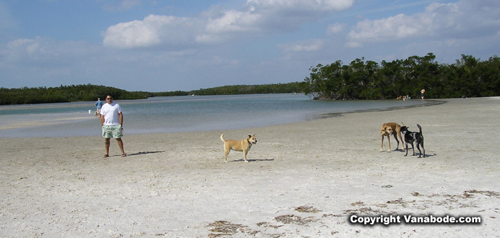 picture of dogs at oceans edge in florida