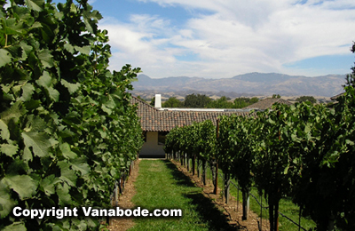 Picture of winery vineyard in Santa Ynez