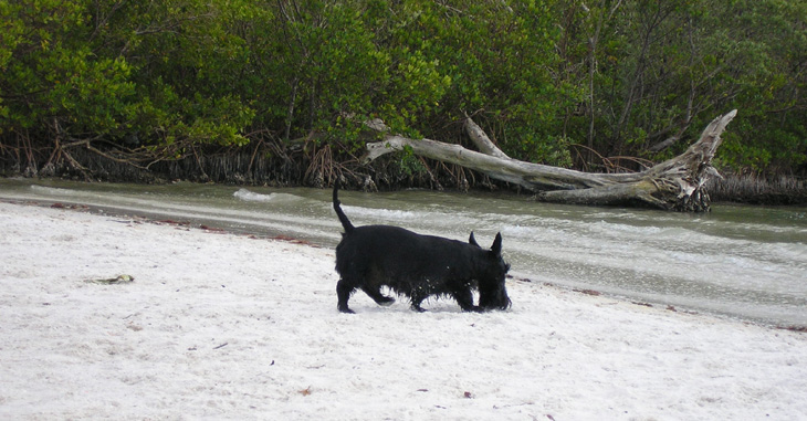 picture of scotty at dog beach